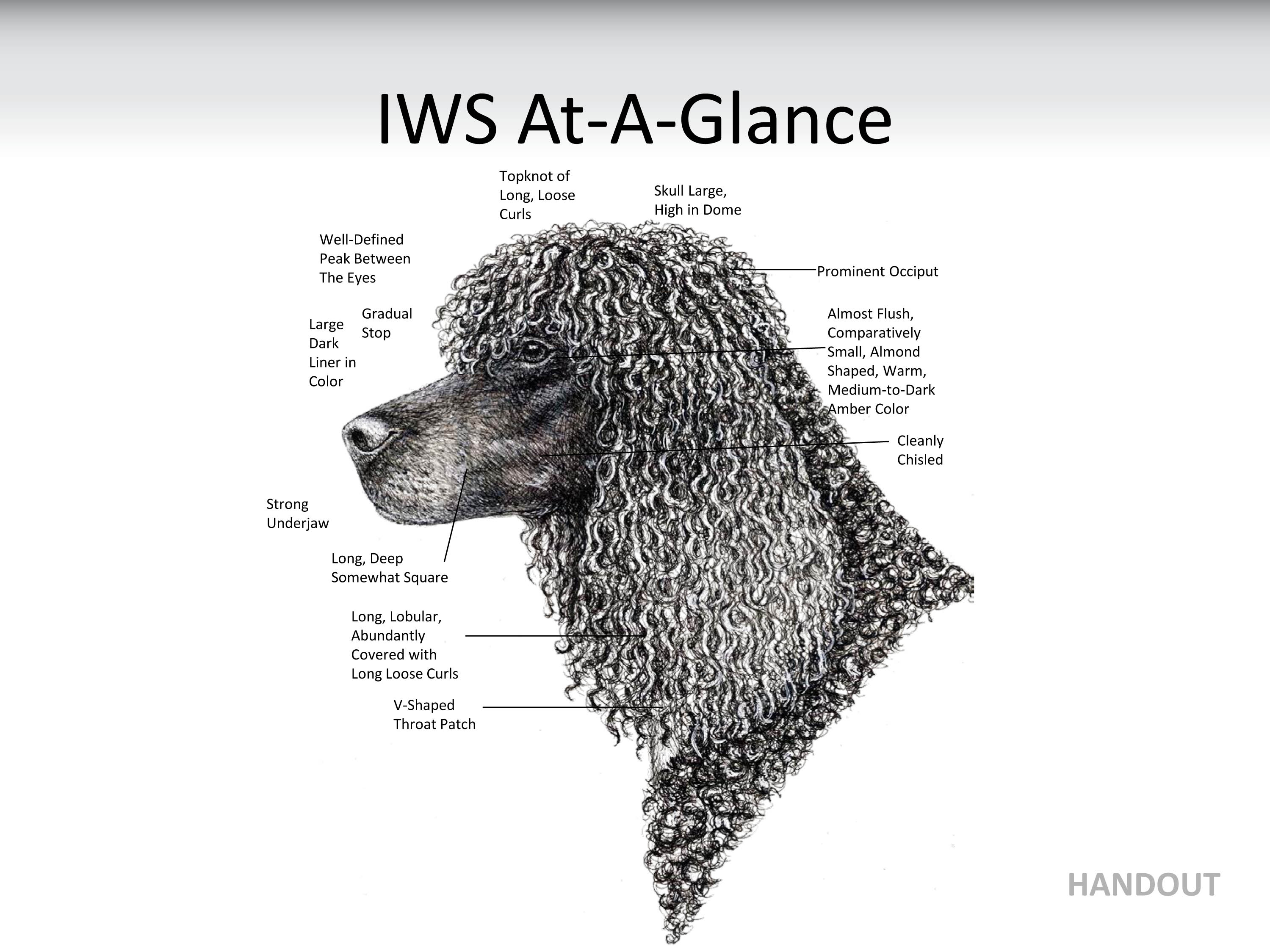 Irish Water Spaniel Club of America - IWS At-A-Glance